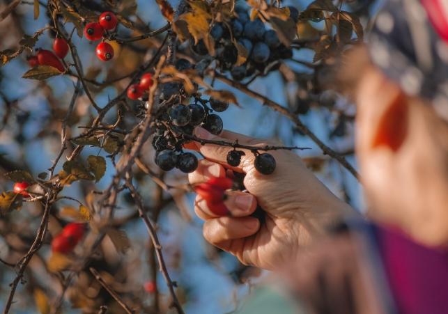berries-5679562_1280