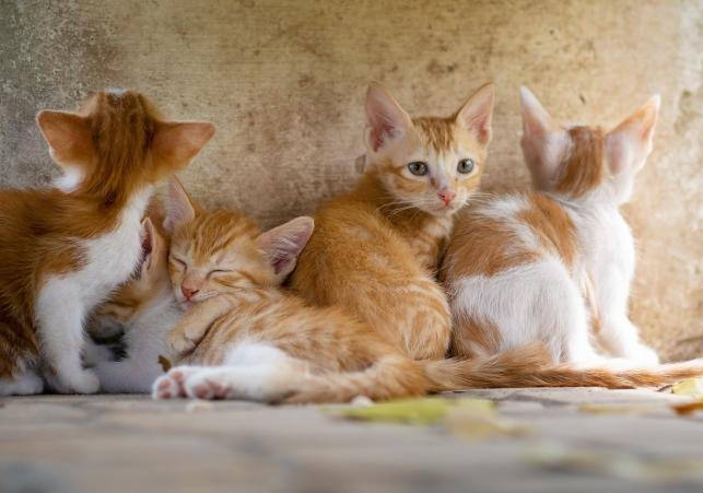 cat-3699032_1280