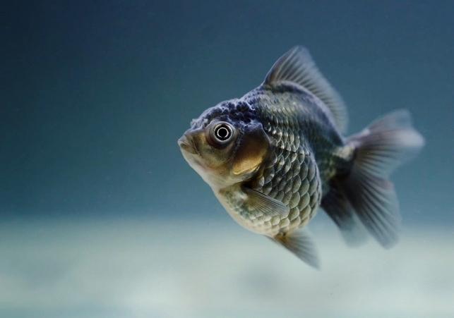 fish-5917864_1280