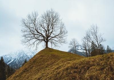 landscape-5581988_1280
